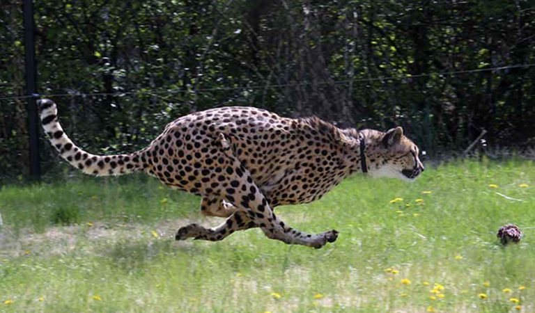Top 10 snelste dieren ter wereld