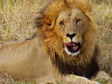 Gevaarlijkste dieren ter wereld.